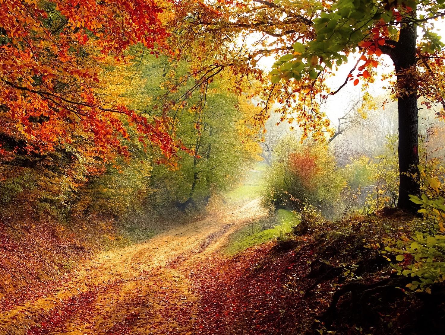 Landschaft Herbst Wald