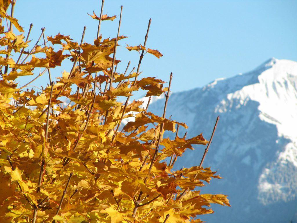 Landschaft Herbst Berg