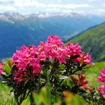 """<br><br><strong>""""10-tägiger Alpenurlaub im Saastal, Uri und Graubünden inklusive Bernina Express""""</strong>"""