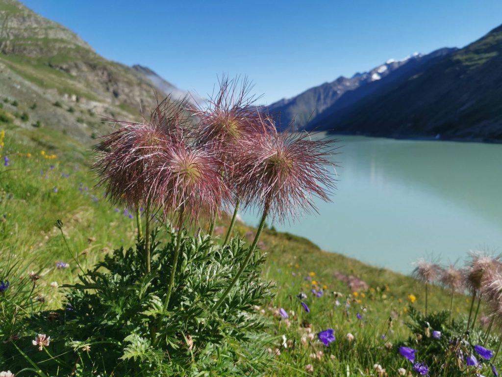 Saastal Landschaften Blumen